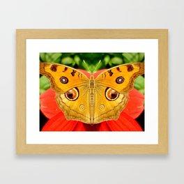 Meadow Argus Butterfly Framed Art Print