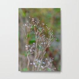 Frosty Seed Heads Metal Print