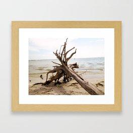 Sanibel Driftwood I Framed Art Print