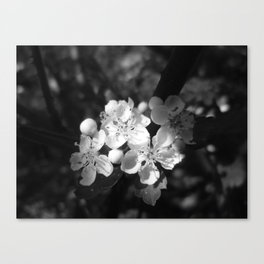 Flowers in the Spotlight Canvas Print