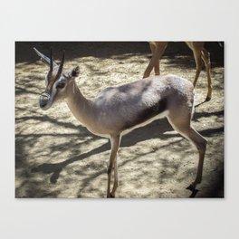 three legged deer Canvas Print