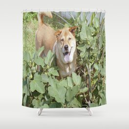 Playing in a fig tree Shower Curtain