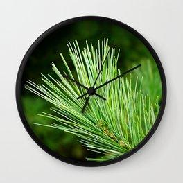 White pine branch Wall Clock