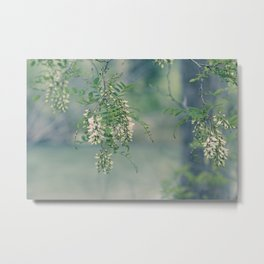 White Spring Blossoms Metal Print
