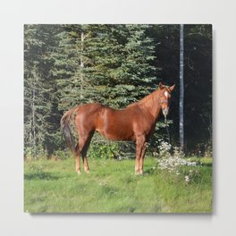 Miss Sadie - A horse, of course Metal Print