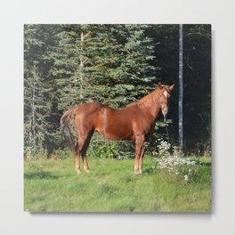 Miss Sadie - A horse, of course Metal Print