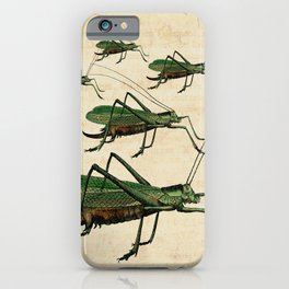 Grasshoppers on the March iPhone Case