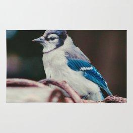 Blue Jay (Color) Rug