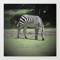 zebra Canvas Prints featuring Zebra by BeachStudio