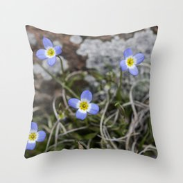 Wildflower Bluets Throw Pillow