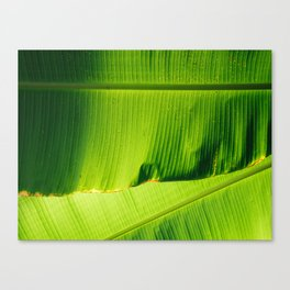 Two Large Lime green Banana Leaves Canvas Print