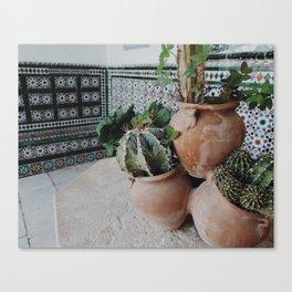 Cactii Canvas Print