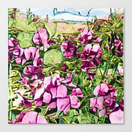 Pink Sweatpea Flowers Summertime Canvas Print