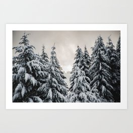 Winter Woods II - Snow Capped Forest Adventure Nature Photography Art Print