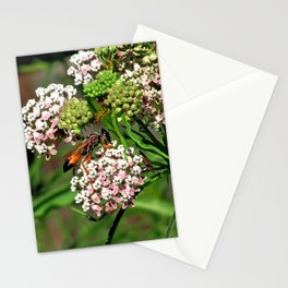 Wasp 1758 Stationery Cards