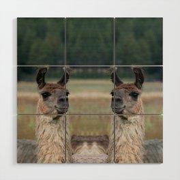 Llama Portrait - 1 Wood Wall Art