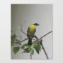 Chichen Itza Bird Canvas Print