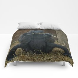Gorilla Lope Comforters