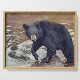Young black bear in a pond Serving Tray