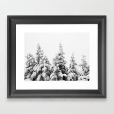 Snow Covered Pines Framed Art Print