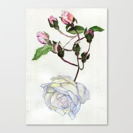 Even Icebergs Have Buds Canvas Print