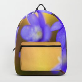 Spring Wildflowers, Beautiful Hepatica in the forest on a sunny and colorful background Backpack