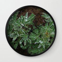Wet Lupine Wall Clock