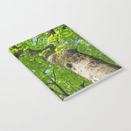 The tree Notebook