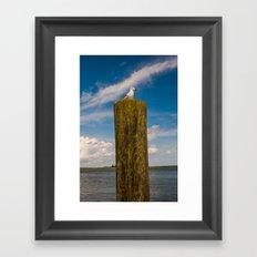 Apalachicola Seagull I Framed Art Print