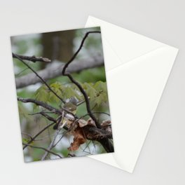 Song Bird's Mate pic 2 Stationery Cards