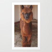 llama Art Prints featuring Llama  by JCalls Photography