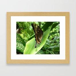 BUTTERFLY NATURALLY Framed Art Print