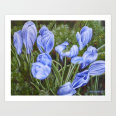 First Crocuses Art Print