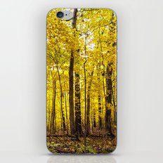 bright yellow woods iPhone & iPod Skin