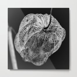 Winter Cherry Black and White Metal Print