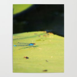 last one about summer creatures Poster