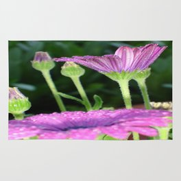 Purple And Pink Daisy Flower in Full Bloom Rug