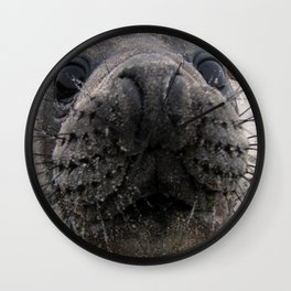 Southern Elephant Seal Pup Wall Clock