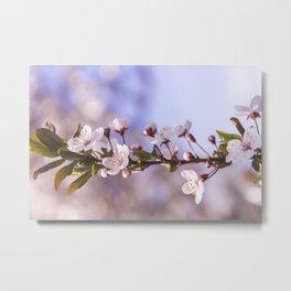 Branch of White Spring Flowers Metal Print