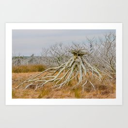 Cape Hatteras Lighthouse thru the Trees Art Print