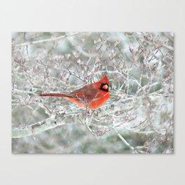 Winter Charmer Canvas Print