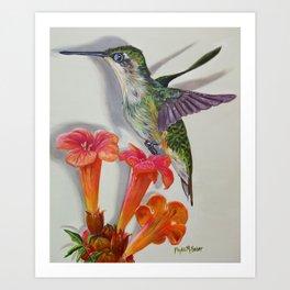Hummingbird And A Trumpet Vine Art Print