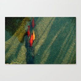 A la queue... de poisson Canvas Print
