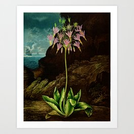 The American Cowslip Flower : New Illustration Of The Sexual System Art Print