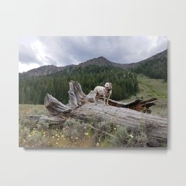 Charlotte in Muldoon Canyon Metal Print