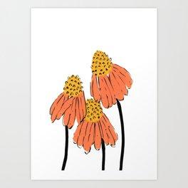 Orange Coneflower Art Print