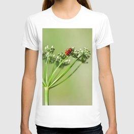 Spring 79 T-shirt