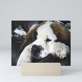 Cute saint bernard puppy relaxing Mini Art Print