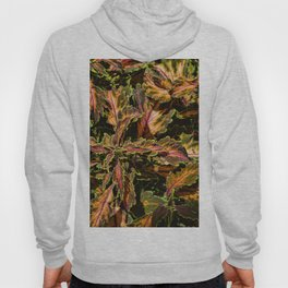Coleus Foliage Hoody