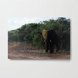Elephants in Safari Metal Print